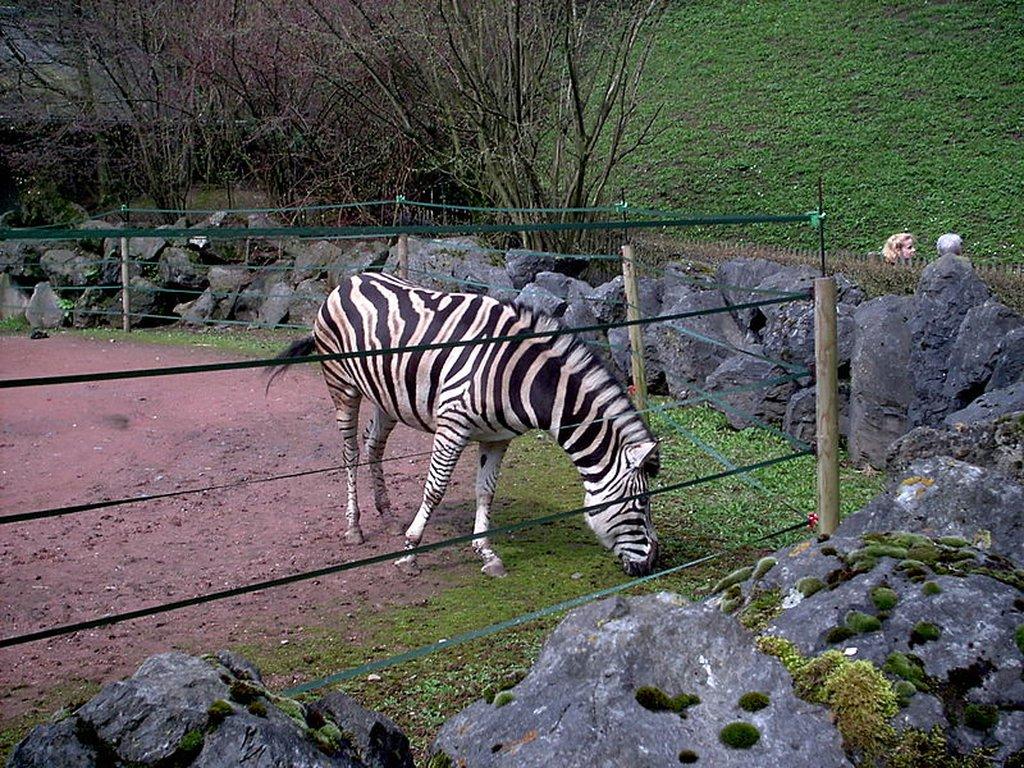 Parc Zoologique de Maubeuge