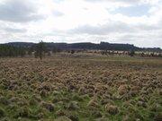 Les tourbières de Longéroux