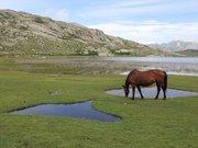 Les chevaux du lac de Nino
