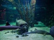 Seaquarium - Musée de la mer