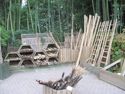 Bamboos for sale