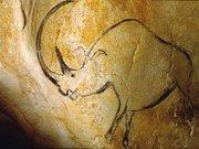 La grotte Chauvet-Pont d'Arc  - Rhinocéros