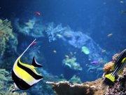 Musée de la Mer à Biarritz (Aquarium)