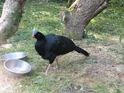 Zoo de Jurques oiseaux 09