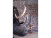 Profil du troupeau prehistorique - Musée de Préhistoire des gorges du Verdon