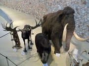 Troupeau préhistorique du musée de Quinson