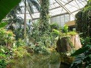 Serre tropicale du Parc Phœnix - Nice