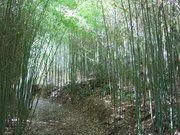 Domaine du Rayol - Bambous