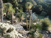 Jardin d'Amérique aride - Domaine du Rayol