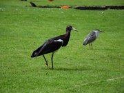 Parc animalier et botanique de Branféré oiseau