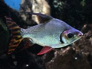 Aquarium tropical de Pierrefitte-Nestalas