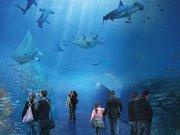 Aquarium - Nausicaá - Centre national de la mer