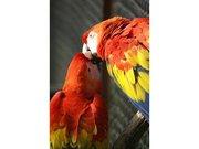 Le Jardin aux Oiseaux (zoo de Upie)