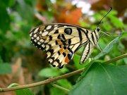 PapillonClasse