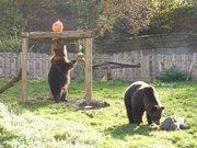 Parc'Ours - Parc Animalier de Borce