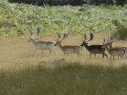 Safari Parc de Haute Saintonge