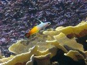 Vannes - aquarium