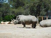 Parc zoologique de Lunaret à Montpellier