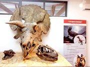 Galerie aux Dinosaures Muse´um de l'Arde`che