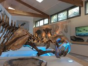 Salle d'exposition- Muse´um de l'Arde`che - Tigre a` dent de sabre