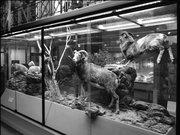 Ambiance Grande galerie du Musée d'histoire naturelle de Lille GLAM MHNL 2016 Lamiot a 14