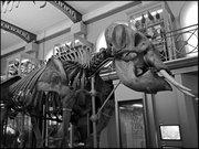 Ambiance Grande galerie du Musée d'histoire naturelle de Lille GLAM MHNL 2016 Lamiot a 11